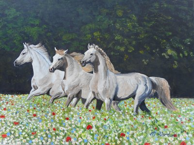 Image of White horses in flower meadow