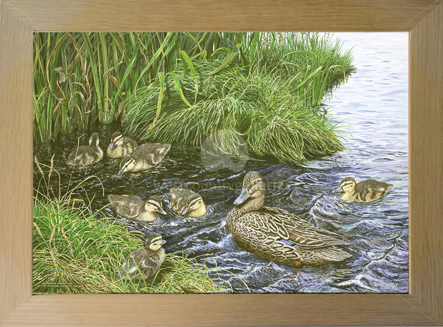 Image of Mallard Family