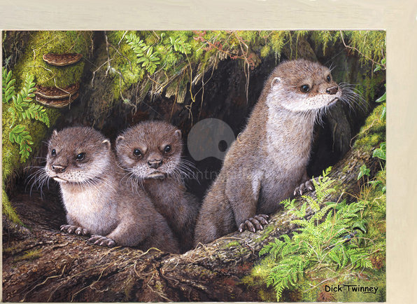 Image of Otter Cubs & Ground Beetle ~ The River Camel, Polbrock, Wadebridge