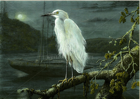 Image of By the Light of the Moon ~Little Egret, Helford Passage, Falmouth