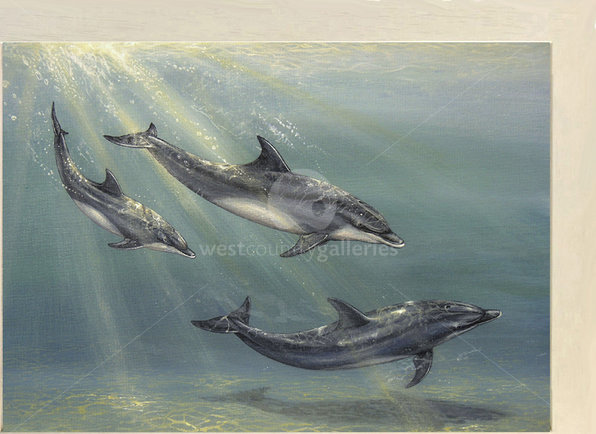 Image of Dolphin Family - Bottle-nose Dolphins, Welcome Vistors, Cornwall
