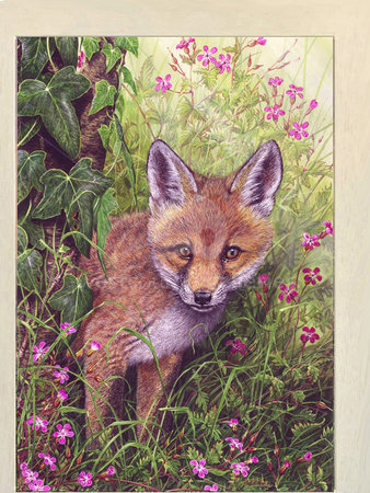 Image of The Young Explorer, Fox Cub & Herb Robert