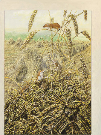 Image of Harvest Mice and Love Token, Tremayne Farm, St Wenn