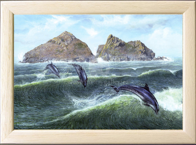 Image of Off Shore Wind, Bottle-nose Dolphins, off Gull Rocks, Holywell Bay, nr. Newquay