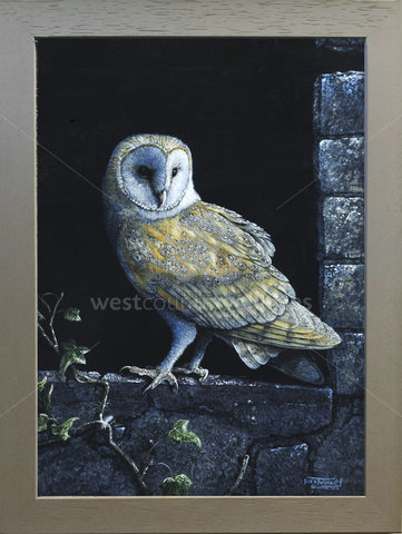 Image of By the Light of the Moon - Barn Owl - Old Barn, Gover Valley, St. Austell, Cornwall