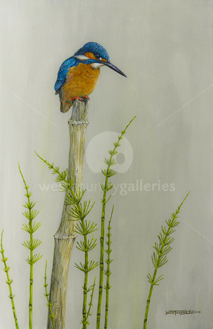 Image of Male Kingfisher and Horse Tail