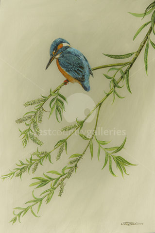 Image of Female Kingfisher & Crack Willow