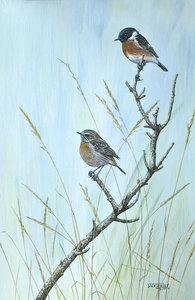 Image of Stonechats and Moorland Grasses