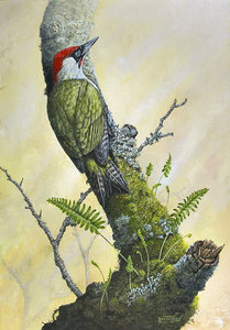 Image of Green Woodpecker & Polypody Fern