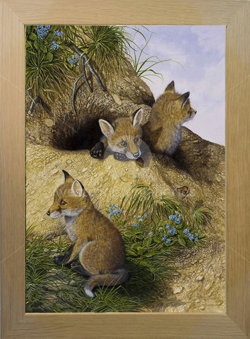 Image of Fox Cubs at Home - Sand Dunes, Crantock Bay, Newquay, Cornwall