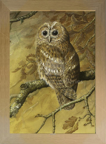 Image of Tawny Owl in Autumn
