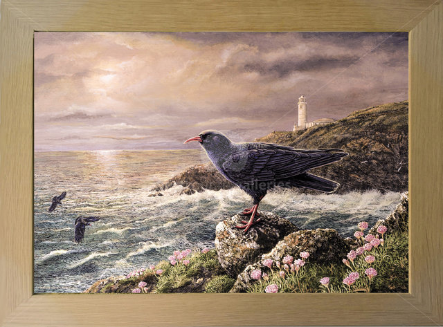 Image of Cornish Sunset - Choughs at Home - Trevose Head Lighthouse, nr. Padstow, Cornwall