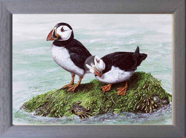 Image of Puffins and Shore Crab - Annet, Isles of Scilly, Cornwall