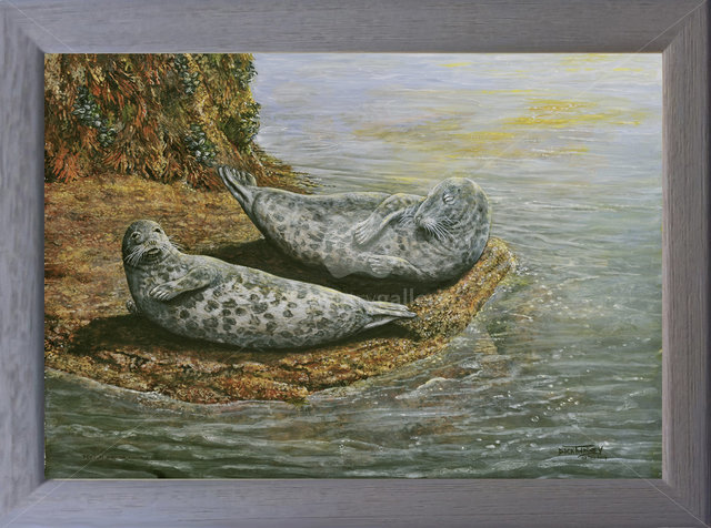 Image of The Sunny Spot - Grey Seals - Low Tide, Newquay Harbour, Cornwall