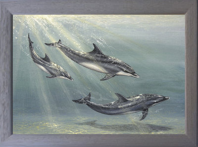 Image of Dolphin Family - Bottle-nose Dolphins