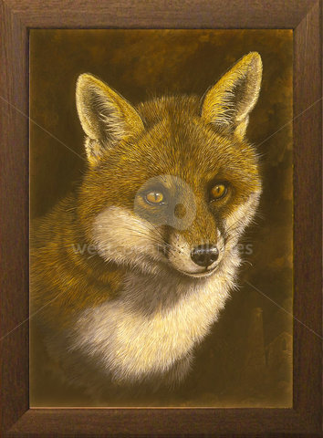 Image of Dog Fox - A portrait of Rex our rescue fox