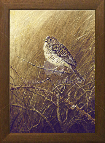 Image of Corn Bunting - Rosenannon Downs, St. Wenn, Cornwall