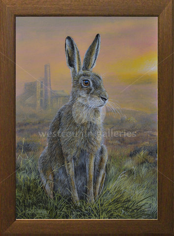 Image of Moorland Sunrise, Brown Hare - Goss Moor, nr. Roche, Cornwall