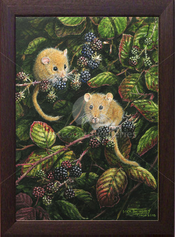 Image of Evening Feed, Dormice & Blackberries - Blackacre Lane, nr. St. Columb Major, Cornwall