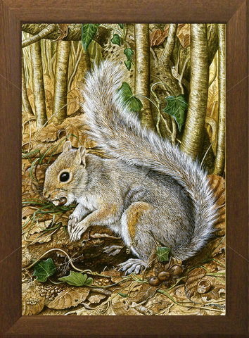 Image of The Nut Store, Grey Squirrel - Winsor Woods, St. Mawgan in Pydar, Cornwall