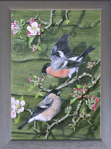 Image of Bullfinches & Apple Blossom - The Artist's Garden, St. Columb Major, Cornwall