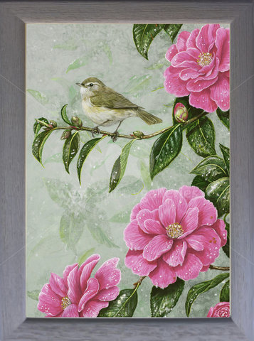 Image of Chiffchaff & Camelia - Lanhydrock, nr. Bodmin. Cornwall