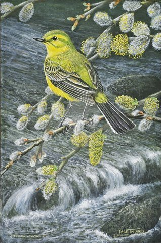 Image of A - Yellow Wagtail and Pussy Willow - SOLD