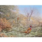 Image of 1A  'Diamond Dawn - Pheasants & Royal Fern'