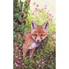 Image of fox Cub and Herb Robert