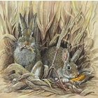 Image of Rabbits in a Maize Field - SOLD