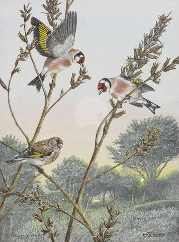 Image of Evening Feed - Goldfinches