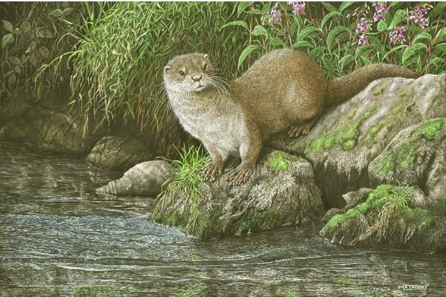 Image of Cornish Otter and Himalayan Balsam