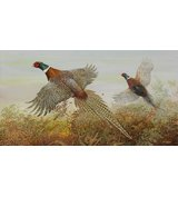Image of Up and Away - Pheasants