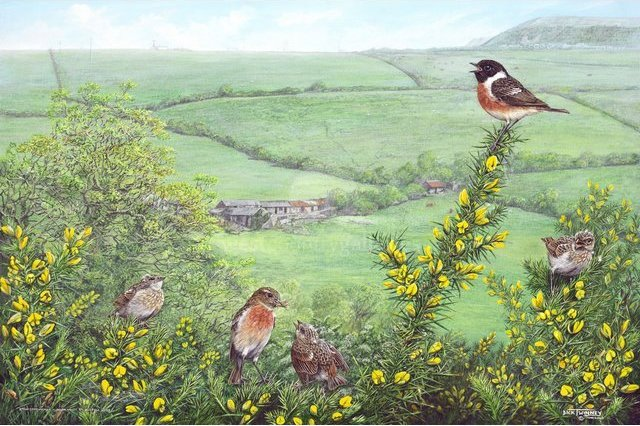 Image of Stonechat Family