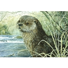 Image of Frosty Morning - Dog Otter