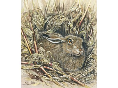 Dick Twinney - A signed and numbered limited edition of 75 prints. A study of a Brown Hare in a maize field. Part of a small project of mine featuring the mammals to be found amongst the sweet corn.