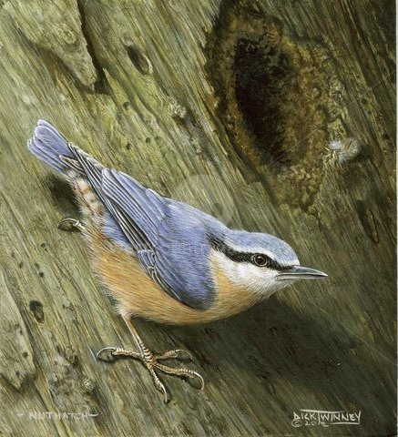 Image of 1abcd 'Nuthatch at Home' SOLD