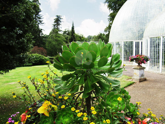Image of By The Palm House 2
