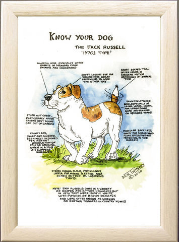 Image of The Jack Russell Terrier