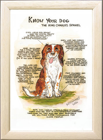 Image of The King Charles Spaniel