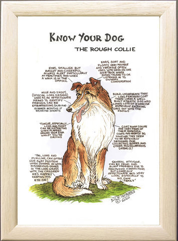 Image of The Rough Collie