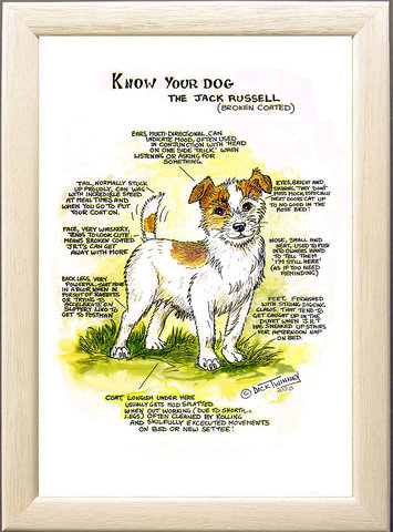 Image of The Jack Russell Terrier (broken coat)