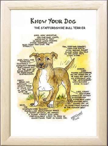 Image of The Staffordshire Bull Terrier (Staffy)