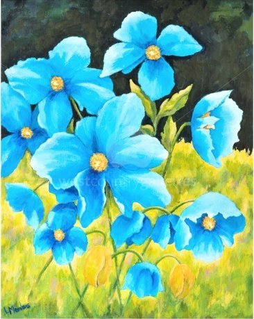 Image of Meconopsis - Himalyan Poppies