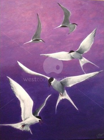 Image of Group of Terns