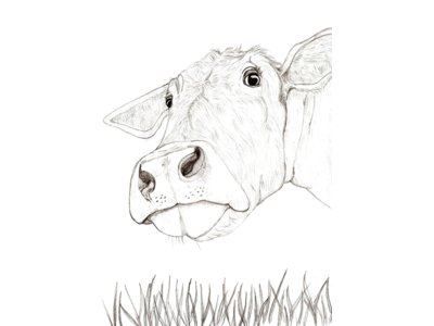 Grazing Cow in Pencil